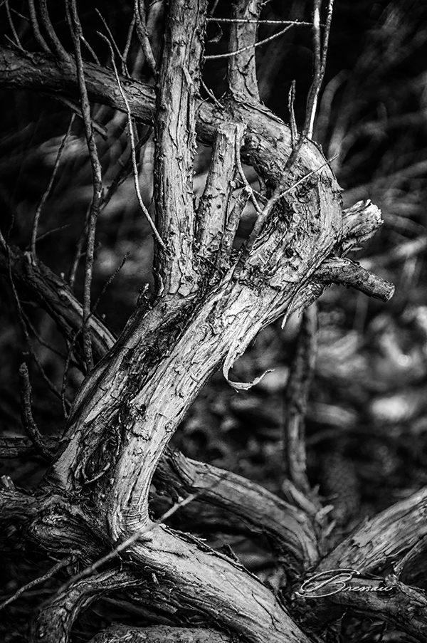A Branch Story - The black and white version.
