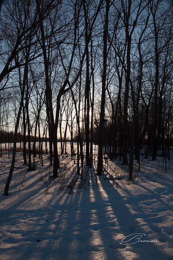 After Dark in the Woods - Original.