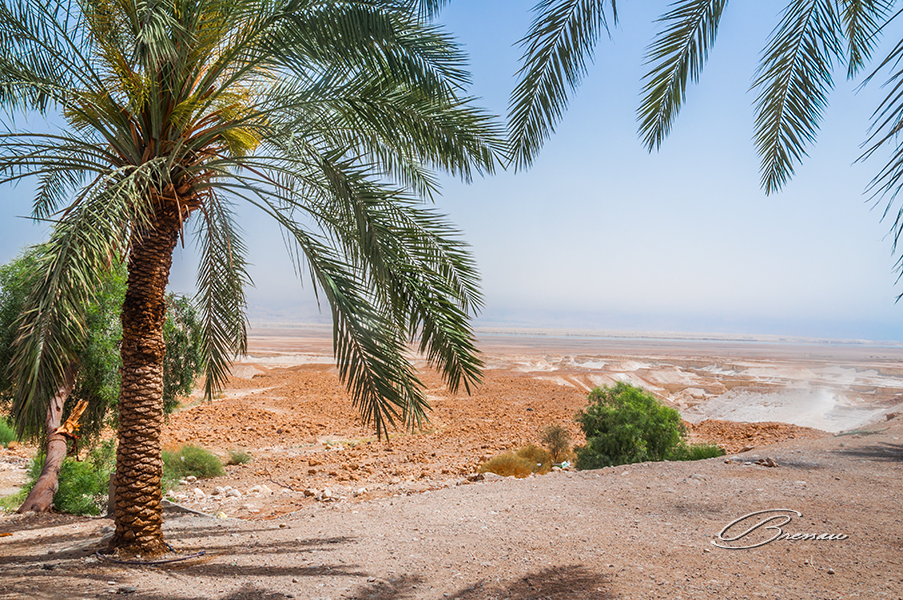 A refreshing post near Masada overlooking the Galilee Sea.