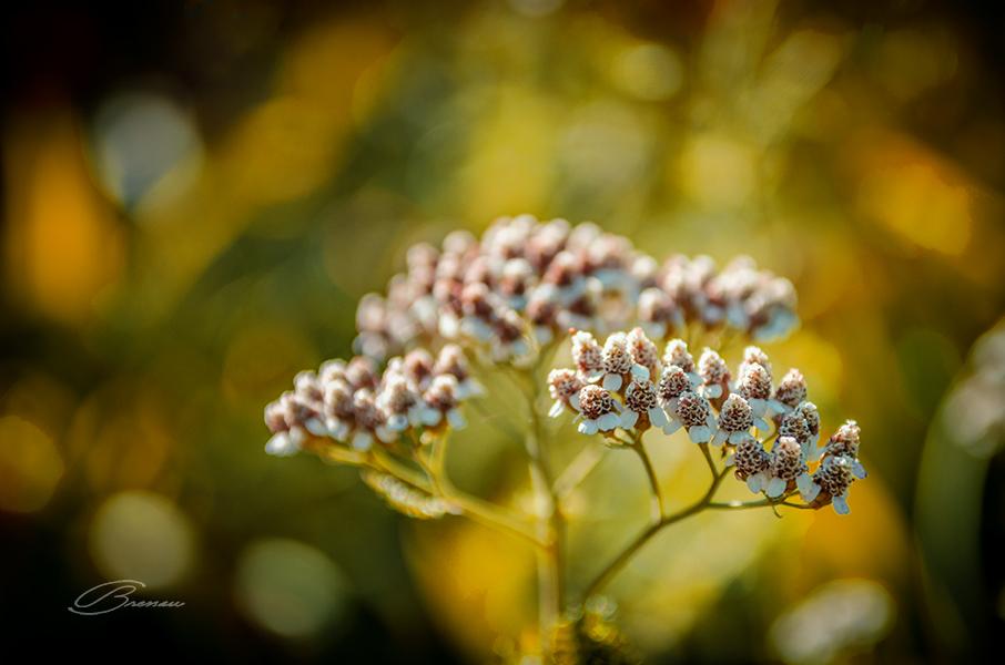 Flowers_5030