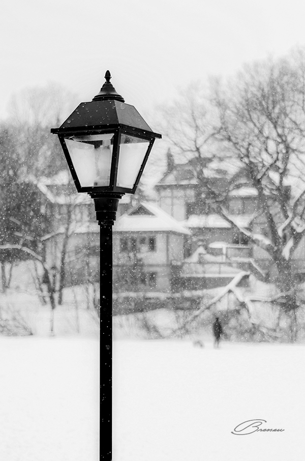 Snow in the park.