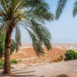 The last oasis before entering Masada, Israel.
