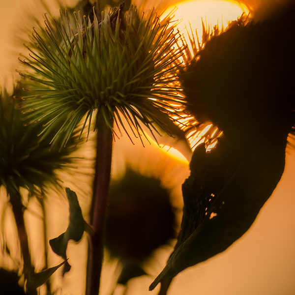 Spiking the Sun. Nikon D7000, f/3.5, ISO 100, 1/500s, Tamron 90mm.