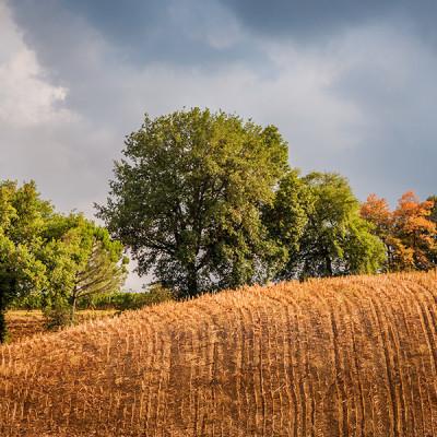 Tuscany Fields, Montalcino, Italy.